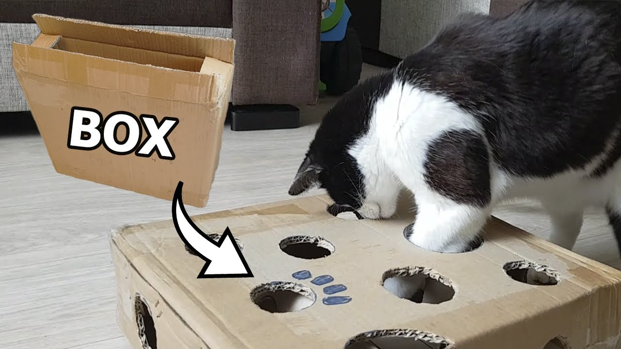 Create an awesome cat toy from a cardboard box